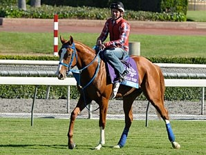 Brown Almighty - Breeders' Cup 2012