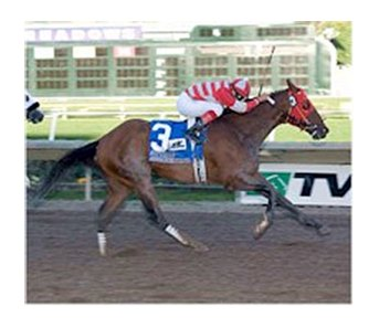 Autism Awareness will make his return to the races Nov. 15 at Golden Gate Fields.