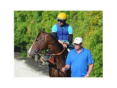 Bodemeister