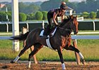 "Orb at Belmont Park<br><a target=""blank"" href=""http://photos.bloodhorse.com/TripleCrown/2013-Triple-Crown/Belmont-Stakes-145/29744699_jpqpwR#!i=2547841120&k=9JG4JRk"">Order This Photo</a>"