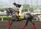 Cathay Pacific Hong Kong Sprint hopeful California Flag prepping on December 12.