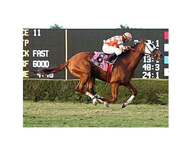 Presious Passion won the Dec. 15 William McKnight Handicap (gr. IIT) at Calder Race Course at odds of 67-1.
