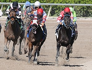 Carolina Lizard wins the 2013 Iron Lady Stakes.
