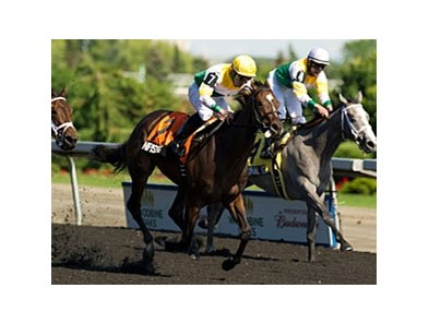 Original Script finished third in the Woodbine Oaks on June 9.