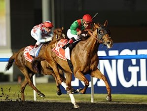 Derby Hero Animal Kingdom Rules World Cup