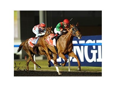 "Animal Kingdom<br><a target=""blank"" href=""http://photos.bloodhorse.com/AtTheRaces-1/at-the-races-2013/27257665_QgCqdh#!i=2432872341&k=WbdBgK7"">Order This Photo</a>"