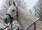Silver Charm poses for fans at Old Friends Farm.