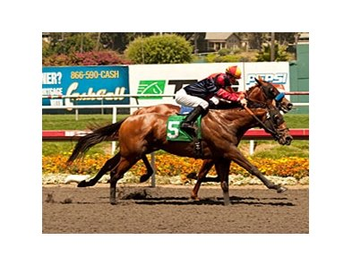 "Dreamy Kid nips Coil to win the Swaps.<br><a target=""blank"" href=""http://www.bloodhorse.com/horse-racing/photo-store?ref=http%3A%2F%2Fpictopia.com%2Fperl%2Fgal%3Fprovider_id%3D368%26ptp_photo_id%3D9591012%26ref%3Dstory"">Order This Photo</a>"