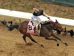 Mine That Bird Headed to the Preakness
