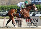 "Mucho Macho Man returned to win by 5 3/4 lengths at Aqueduct Nov. 9.<br><a target=""blank"" href=""http://www.bloodhorse.com/horse-racing/photo-store?ref=http%3A%2F%2Fpictopia.com%2Fperl%2Fgal%3Fprovider_id%3D368%26ptp_photo_id%3D9732441%26ref%3Dstory"">Order This Photo</a>"