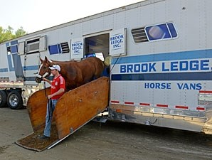 Wise Dan arrives at the 2012 Breeders' Cup.