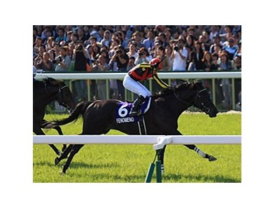 Fenomeno wins the Tenno Sho.