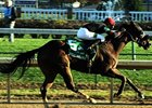 Musical Romance in the Breeders' Cup Filly and Mare Sprint.