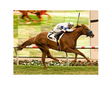 "Sidney's Candy won the La Jolla on the turf at Del Mar last August.<br><a target=""blank"" href=""http://www.bloodhorse.com/horse-racing/photo-store?ref=http%3A%2F%2Fpictopia.com%2Fperl%2Fgal%3Fprovider_id%3D368%26ptp_photo_id%3D9145494%26ref%3Dstory"">Order This Photo</a>"