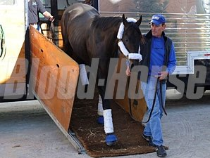 Victor's Cry arrives at Woodbine on September 14, 2010.