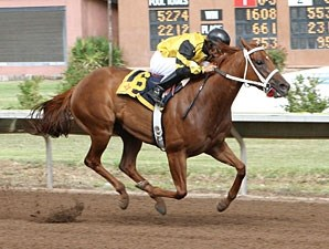 Hennesey Smash wins the 2012 Chief Narbona.
