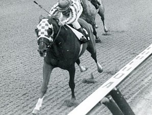 Secretariat wins the 1973 Gotham.
