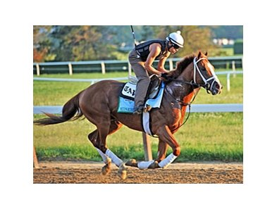 "Midnight Taboo  <br><a target=""blank"" href=""http://photos.bloodhorse.com/TripleCrown/2013-Triple-Crown/Belmont-Stakes-145/29744699_jpqpwR#!i=2547838950&k=J26KkKG"">Order This Photo</a>"