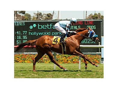 Dhaamer won the Sunset Handicap at Hollywood Park on July 15.