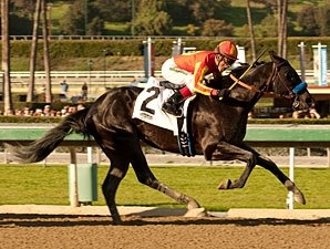Shakin It Up Stretches Out for Sunland Derby