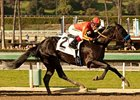 Shakin It Up won the San Vicente Stakes on Feb 17.