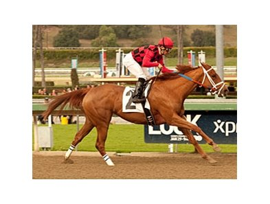 Reneesgotzip makes her first start around 2 turns in the Las Virgenes.