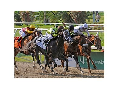 "A Little Warm (center) finished second in the Louisiana Derby earlier this year.<br><a target=""blank"" href=""http://www.bloodhorse.com/horse-racing/photo-store?ref=http%3A%2F%2Fpictopia.com%2Fperl%2Fgal%3Fprovider_id%3D368%26ptp_photo_id%3D8864068%26ref%3Dstory"">Order This Photo</a>"