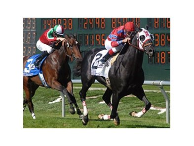 Bold Chieftain takes on 8 in the San Francisco Mile.