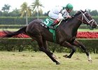 Tropical Park Derby (gr. IIIT) winner Cowboy Cal is being pointed to the April 12 Blue Grass (gr. I).