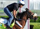 "Java's War make his California debut in the Swaps Stakes.<br><a target=""blank"" href=""http://photos.bloodhorse.com/TripleCrown/2013-Triple-Crown/Kentucky-Derby-Workouts/29026796_jvcnn8#!i=2490691729&k=rPC6FMK"">Order This Photo</a>"