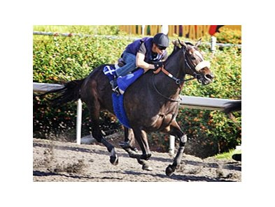 Zenyatta drilled a fluid six furlongs  in 1:11 4/5 on morning of Oct. 30 at Hollywood Park.