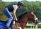 "Mucho Macho Man at Belmont Park on June 5, 2011.<br><a target=""blank"" href=""http://www.bloodhorse.com/horse-racing/photo-store?ref=http%3A%2F%2Fpictopia.com%2Fperl%2Fgal%3Fprovider_id%3D368%26ptp_photo_id%3D9551911%26ref%3Dstory"">Order This Photo</a>"