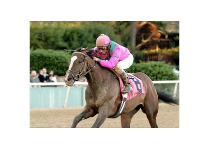 Southwest (gr. II) winner Denis of Cork is now training at Churchill Downs.