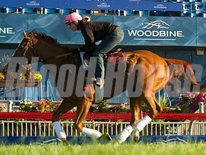 Wise Dan - Woodbine, September 14, 2013.