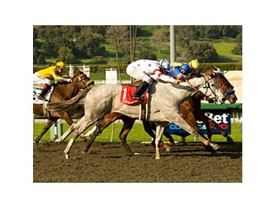 "Stardom Bound stretches for the win in the Santa Anita Oaks.<br><a target=""blank"" href=""http://www.bloodhorse.com/horse-racing/photo-store?ref=http%3A%2F%2Fpictopia.com%2Fperl%2Fgal%3Fprovider_id%3D368%26ptp_photo_id%3D7865245%26ref%3Dstory"">Order This Photo</a>"