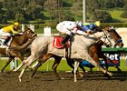 "The top four finishers in the Santa Anita Oaks could all return in the April 4 Ashland at Keeneland. <br><a target=""blank"" href=""http://www.bloodhorse.com/horse-racing/photo-store?ref=http%3A%2F%2Fgallery.pictopia.com%2Fbloodhorse%2Fgallery%2FS688132%2Fphoto%2F7865245%2F%3Fo%3D2"">Order This Photo</a>"