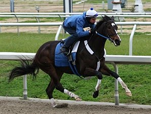Rachel Drills Six Furlongs in Company