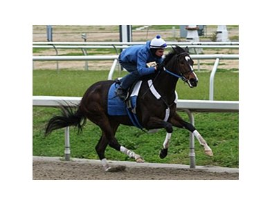 "Rachel Alexandra worked 6 furlongs in 1:13 3/5 on March 2.<br><a target=""blank"" href=""http://www.bloodhorse.com/horse-racing/photo-store?ref=http%3A%2F%2Fpictopia.com%2Fperl%2Fgal%3Fprovider_id%3D368%26ptp_photo_id%3D8816978%26ref%3Dstory"">Order This Photo</a>"