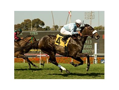 "Harmonious has won four of nine and earned $550,420. <br><a target=""blank"" href=""http://www.bloodhorse.com/horse-racing/photo-store?ref=http%3A%2F%2Fpictopia.com%2Fperl%2Fgal%3Fprovider_id%3D368%26ptp_photo_id%3D9098865%26ref%3Dstory"">Order This Photo</a>"