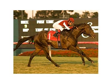 "Victory's Cry emerges from the pack to take the Citation.<br><a target=""blank"" href=""http://www.bloodhorse.com/horse-racing/photo-store?ref=http%3A%2F%2Fpictopia.com%2Fperl%2Fgal%3Fprovider_id%3D368%26ptp_photo_id%3D9301743%26ref%3Dstory"">Order This Photo</a>"