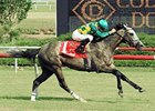 Paddy O'Prado won the Colonial Turf Cup at Colonial Downs on June 19.
