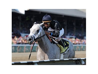 "Wired Bryan is the only stakes winner in the Saratoga Special Field.<br><a target=""blank"" href=""http://photos.bloodhorse.com/AtTheRaces-1/at-the-races-2013/27257665_QgCqdh#!i=2648401146&k=zRmqmxB"">Order This Photo</a>"