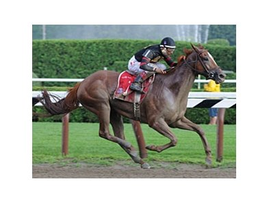 "Ginger Punch won the Go for Wand (gr. I) at Saratoga on July 26. <br><a target=""blank"" href=""http://www.bloodhorse.com/horse-racing/photo-store?ref=http%3A%2F%2Fpictopia.com%2Fperl%2Fgal%3Fprovider_id%3D368%26ptp_photo_id%3D5274784%0D%0A%26ref%3Dstory"">Order This Photo</a>"