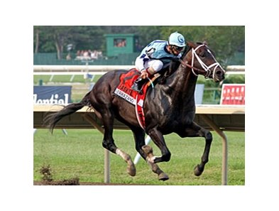 "Verrazano<br><a target=""blank"" href=""http://photos.bloodhorse.com/AtTheRaces-1/at-the-races-2013/27257665_QgCqdh#!i=2662607600&k=c3tFwXz"">Order This Photo</a>"