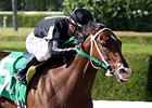 R Free Roll tries to win her first graded stakes in the Sugar Swirl.