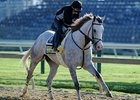 "Cozzetti at Pimlico<br><a target=""blank"" href=""http://photos.bloodhorse.com/TripleCrown/2012-Triple-Crown/Preakness-Stakes-137/23013252_TrG3NS#!i=1854021721&k=ZdnCPgp"">Order This Photo</a>"