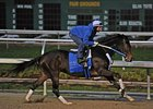 "Rachel Alexandra is in training at Fair Grounds.<br><a target=""blank"" href=""http://www.bloodhorse.com/horse-racing/photo-store?ref=http%3A%2F%2Fpictopia.com%2Fperl%2Fgal%3Fprovider_id%3D368%26ptp_photo_id%3D8770041%26ref%3Dstory"">Order This Photo</a>"