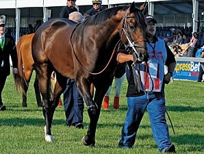 First Dude before the 2010 Preakness.