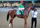 Animal Kingdom, Others Ready for Dubai Flight