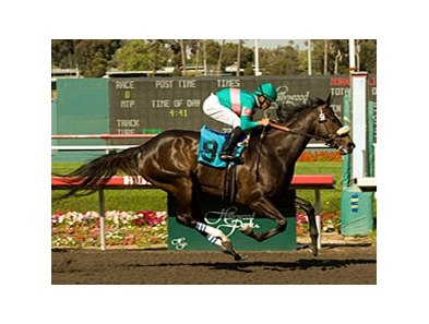 "If Zenyatta runs in the Breeders' Cup Classic, she will be the favorite on the official Breeders' Cup morning line.<br><a target=""blank"" href=""http://www.bloodhorse.com/horse-racing/photo-store?ref=http%3A%2F%2Fpictopia.com%2Fperl%2Fgal%3Fprovider_id%3D368%26ptp_photo_id%3D8148336%26ref%3Dstory"">Order This Photo</a>"
